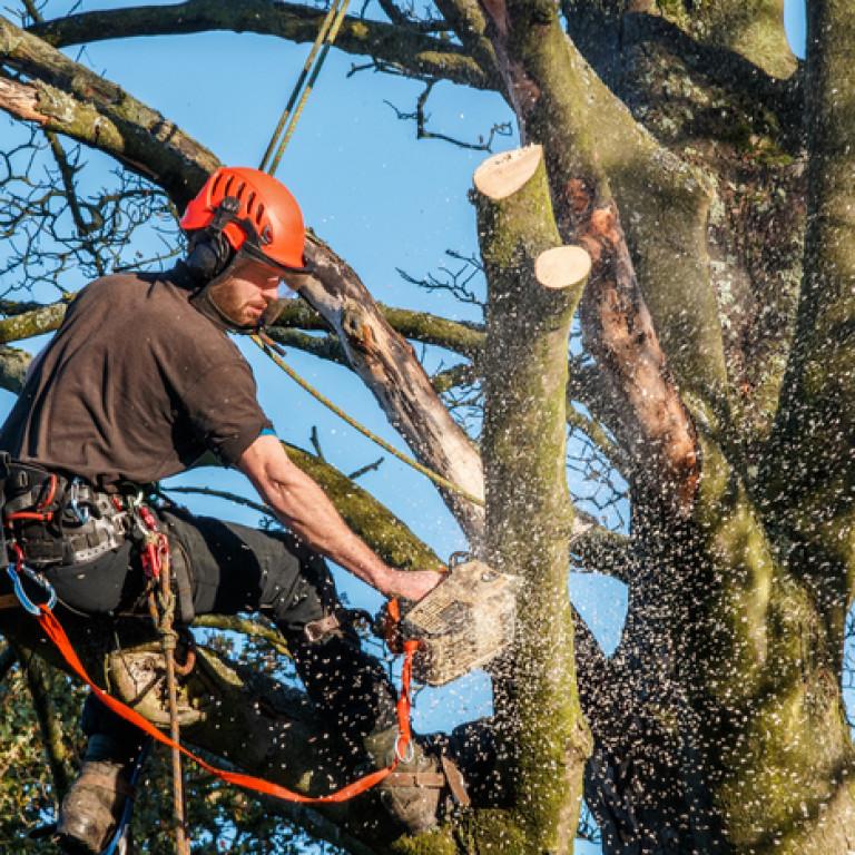Elagage ou abattage d'arbres